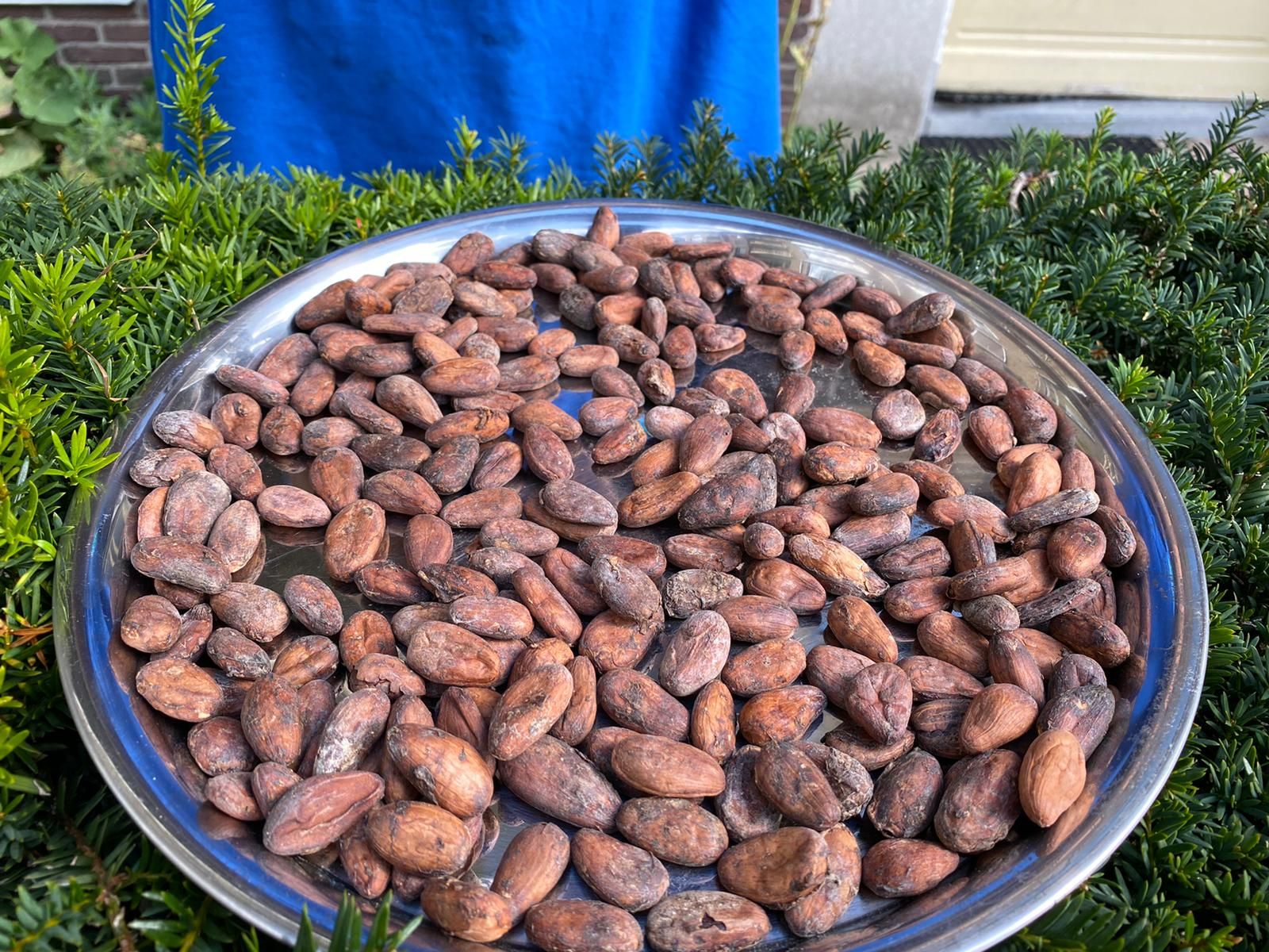 Cocoa beans Cameroon