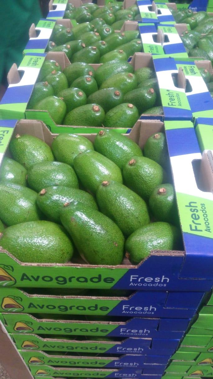 Avocados ready for distribution