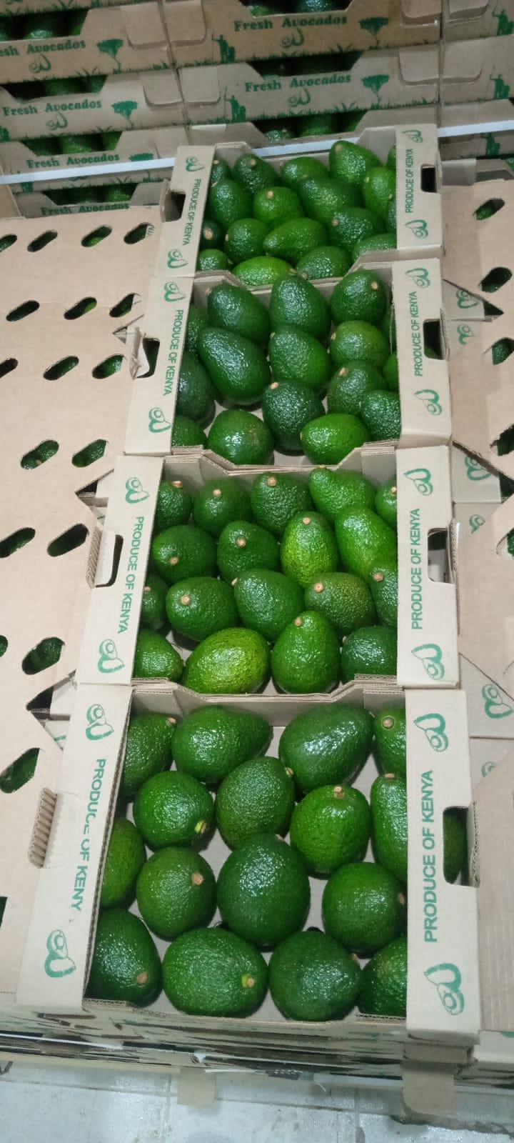 Fresh and Quality Avocados