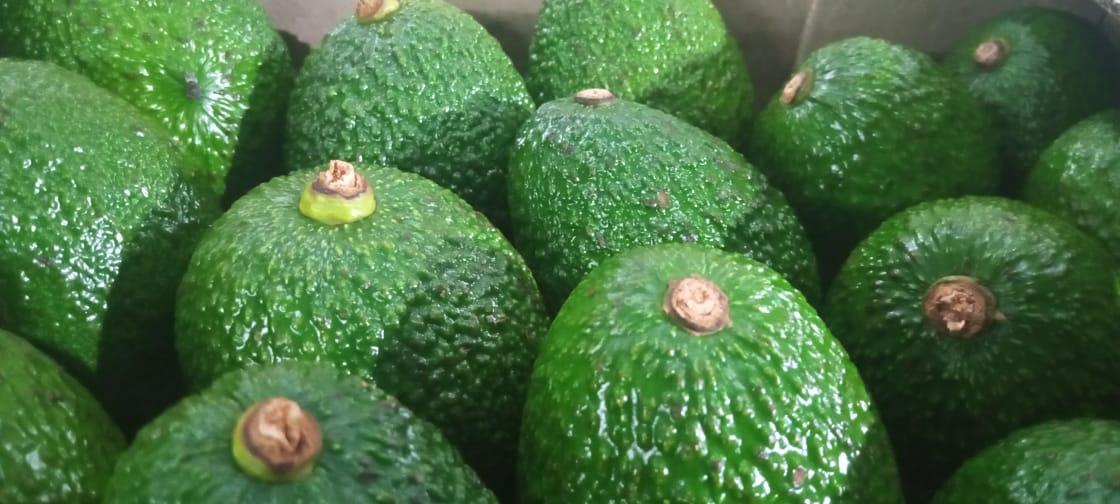 Kenya Avocados